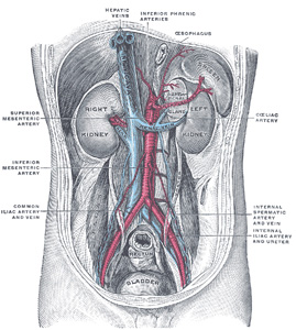The Urinary Organs