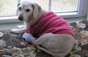 La perra más vieja del mundo murió a los 147 años/AP