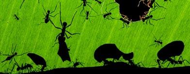 """""""Una maravilla de hormigas"""" del fotógrafo Bence Máté / Foto tomada del Veolia Environnement Wildlife Photographer of the Year 2010"""