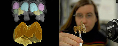 Tanya Smith, profesora de biología humana en la evolución en la Universidad de Harvard / Foto: Cortecía ESRF
