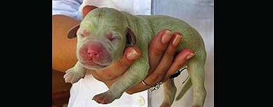 Nace perro verde en Brasil / Foto: Especial El Universal