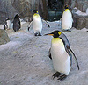 Kelly Tarlton's Antarctic Encounter and Underwater World