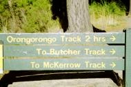 Orongorongo Track, Wellington