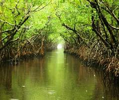 Ten Thousand Islands, Everglades National Park, FL