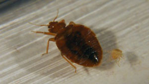 Worst Cities for Bed Bugs