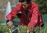 Michelle Obama Cultive un Jardin Bio