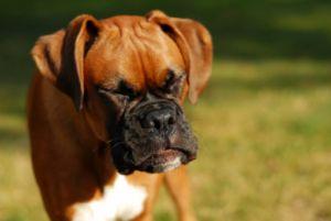 dogsneeze 91704460 - Espirro reverso