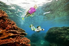 Snorkeling in the Great Barrier Reef, Australia