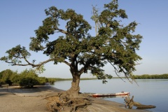 Saloum Delta (Senegal)