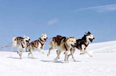 Dogsled on a Glacier