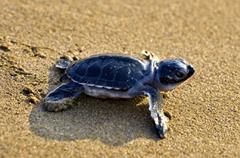 Help Sea Turtles