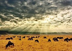 wonders of Ngorongoro Conservation Area, Tanzania