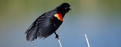 Un pájaro negro / Foto: AP