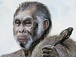 Homo floresiensis. (AP Photo/National Geographic, Peter Schouten)