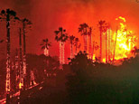 Towering palm trees explode as flames jump across state highway 154 early Friday morning May 8, 2009, in Santa Barbara, Calif., bringing the fire dangerously close to heavily populated areas.(AP Photo/Keith D. Cullom)