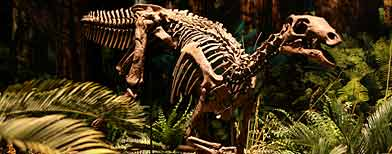 What killed dinosaurs?