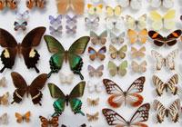 Butterflies.jpg/