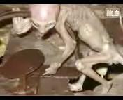 Un cucciolo di alieno? Un bufala terrestre @ Yahoo! Video