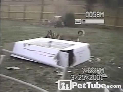 The Big Bad Wolf vs. The Cardboard House - Yahoo! view on video.yahoo.com tube online.