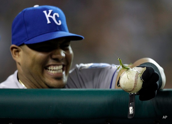 Royals' Brayan Peña defends Earth from praying mantis invasion