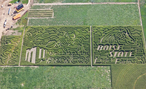 Is this heaven? No, it's a Boise State corn maze.