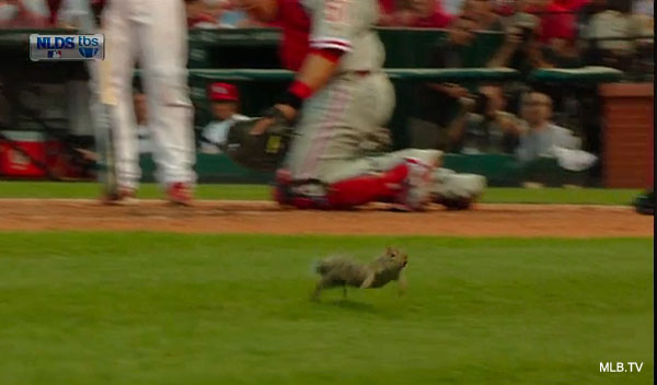 Squirrel returns to Busch Stadium, heads for home during at-bat