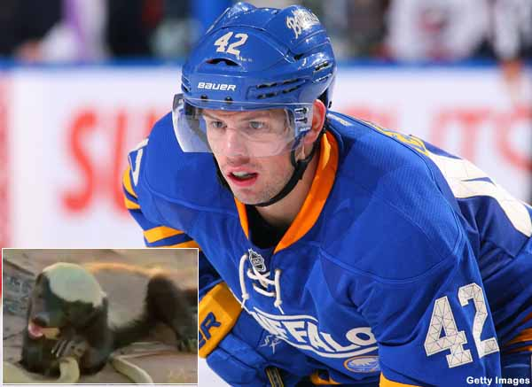 The NHL is filled with honey badgers; does your team have one?