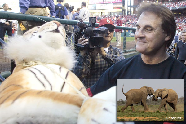Tony La Russa's next job: Elephant keeper?