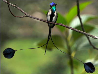Foto-Foto Burung Langka yang Hampir Punah | Hasim's Spa