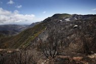Burnt trees remain after a wildfire swept through the Garajonay national park on the island of La Gomera. Firefighters made strides Tuesday against wildfires on Spain's Canary Islands, but the country was on alert for more blazes due to an impending heatwave