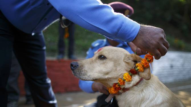 A police officer puts a garland on a police dog during the dog festival as part of celebrations of Tihar at Nepal Police Academy in Kathmandu