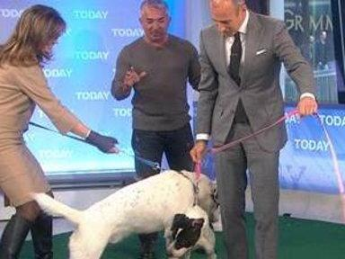 Cesar Millan Puts Anchors, Dogs Through Challenges
