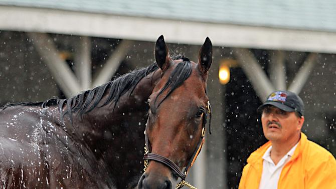 Kentucky Derby and Preakness Stakes winner American Pharoah is held by Raul Ramirez as he is bathed outside Barn 33 at Churchill Downs in Louisville, Ky., Monday, May 25, 2015. American Pharoah will race in the Belmont Stakes on June 6 in Elmont, N.Y.  (AP Photo/Garry Jones)