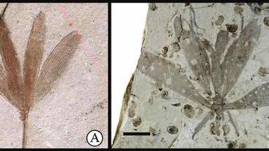 Fossil Fly's Camouflage Tricks Scientists