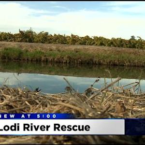 Man Saves Woman From Car Sinking In Lodi Canal