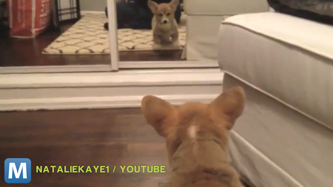 Viral Video Recap: Fun With Electricity and Spiteful Cats