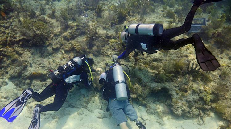 In this Monday, July 28, 2014 photo provided by the Florida Keys News Bureau, retired Army Sgt. 1st Class Billy Costello, center, who lost his right leg while stationed in Afghanistan, dives with the use of a prosthetic to help transplant coral in the Florida Keys National Marine Sanctuary off Big Pine Key, Fla. Costello is one of a dozen wounded veterans in the Keys helping transplant corals on a special section of the reef, permitted to Mote Marine Laboratory, and set aside as a remembrance area for fallen American service personnel. (AP Photo/Florida Keys News Bureau, Joe Berg)