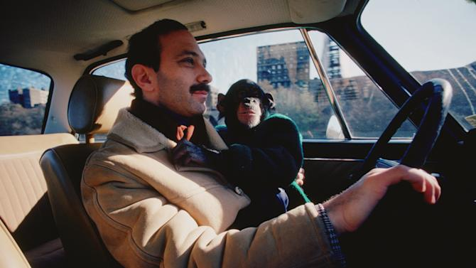 """In this film publicity image released by Roadside Attractions, Nim Chimpsky, rides with Professor Herbert Terrace in a scene from """"Project Nim.""""  (AP Photo/Roadside Attractions, Susan Kuklin)"""