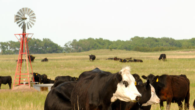 FILE - This June 18, 2009 file photo shows cows grazing in Rock County, Neb. Compared to the other animal proteins, beef produces five times more heat-trapping gases connected to global warming per calorie, puts out six times as much nitrogen for water pollution, takes 11 times more water for irrigation and uses 28 times the land, according to the study published Monday in the journal Proceedings of the National Academy of Sciences. (AP Photo/Bill Wolf, File)