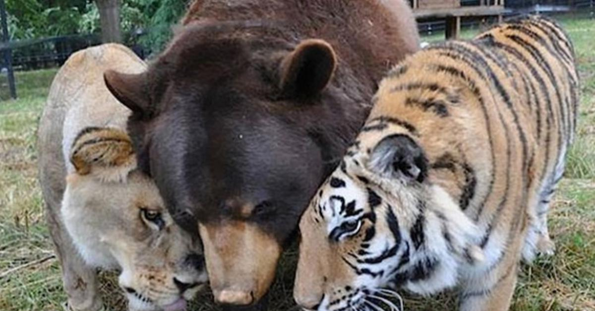 17 Unlikely Animal Friendships Too Cute To Miss