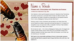 The Good, Bad & Ugly: Valentines Day Ads image roach