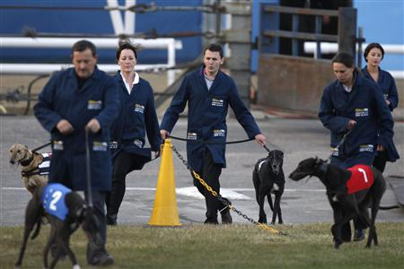 Trainers guide their greyhounds to take positions for a race at Wimbledon stadium