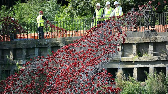 Poppies Commemorating World War I Go on UK Tour