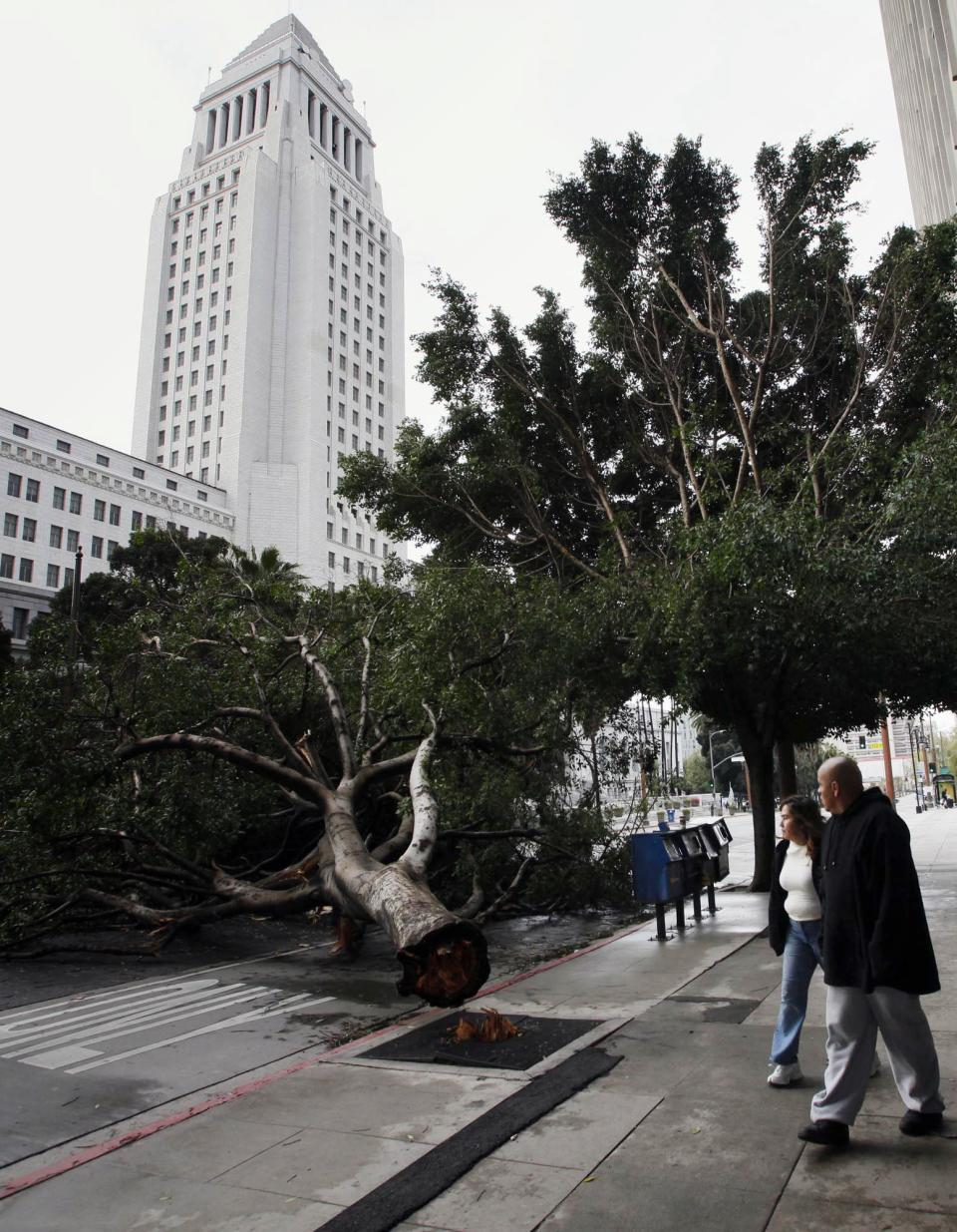 Pedestrians walk past a fallen tree near the Los Angeles City Hall after a storm swept through southern California on Monday, March 21, 2011. The weather was moving out of the region and flood advisories were canceled for Los Angeles County, but the weather service warned that debris flows and flash flooding in some areas were still possible. (AP Photo/Nick Ut)
