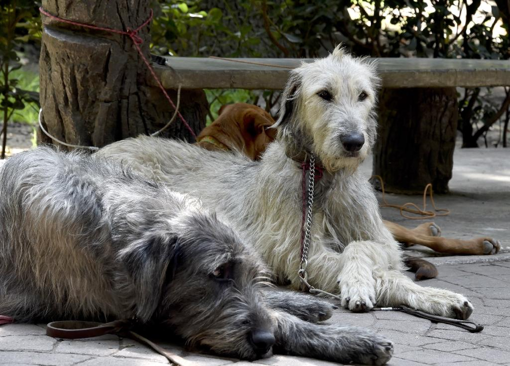 Is a serial dog killer on the loose in Mexico City?