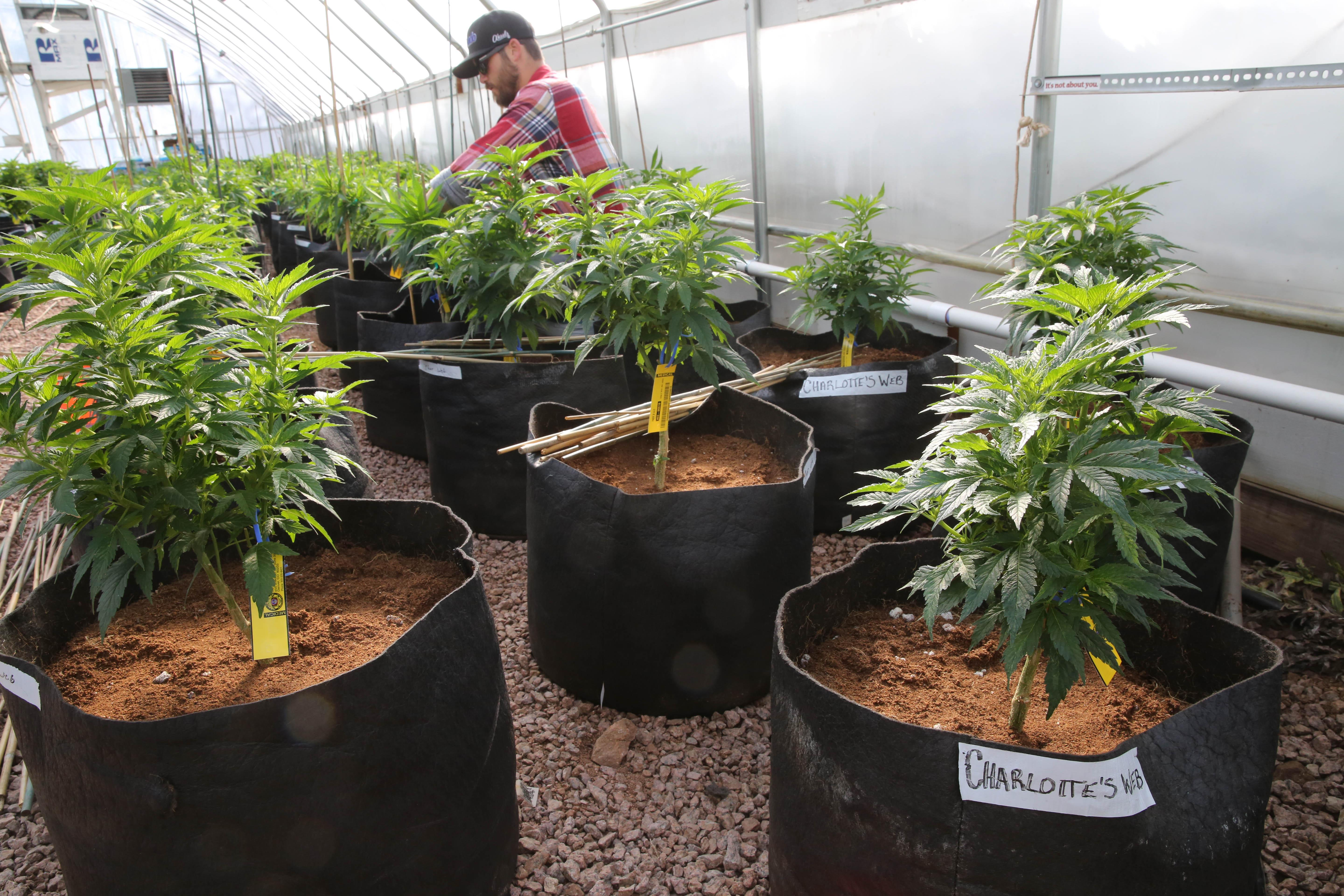 Legalized pot in Colorado: a year in review