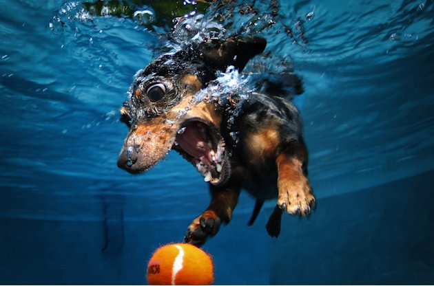 Underwater Dogs