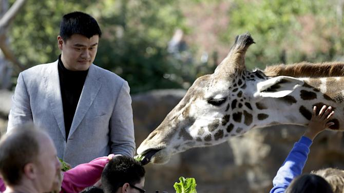 Yao Ming, a former Houston Rockets center, joins school children in feeding a giraffe at the Houston Zoo, Thursday, Feb. 14, 2013, in Houston. Yao has increased his role as an animal-rights activist since his retirement from basketball in 2011. (AP Photo/Pat Sullivan)