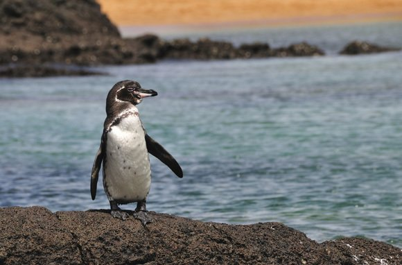 Galapagos Islands (Photo: Thinkstock/iStockphoto)
