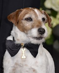 Uggie, canine star of the Oscar-winning film &quot;The Artist&quot;